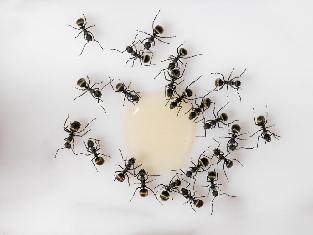 Ako sa zbaviť mravcov