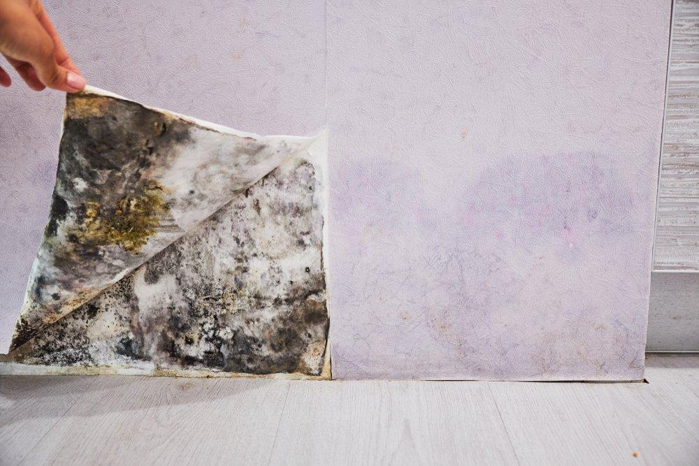 pleseň na stene, vlhkosť - použitie odvlhčovača