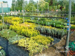 TÓTH Garden - rastliny