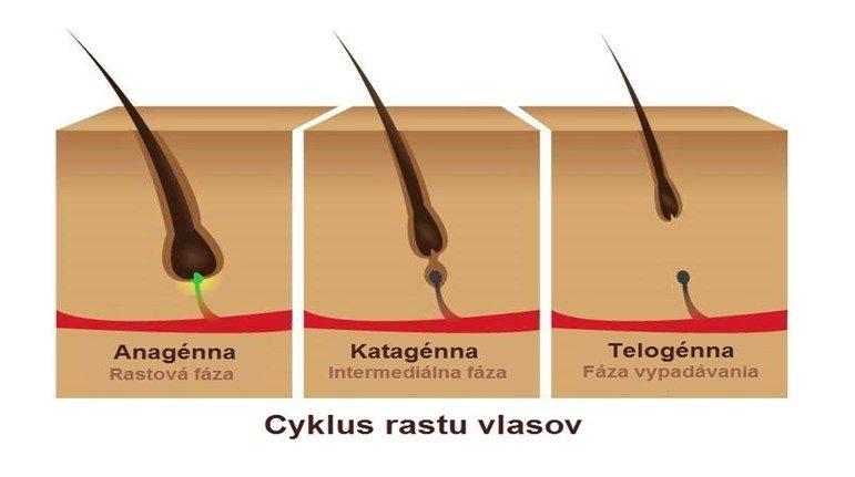 Cyklus rastu vlasov