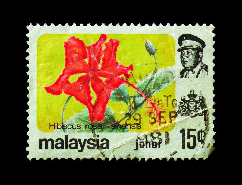 Čínska ruža je národným kvetom Malajzie