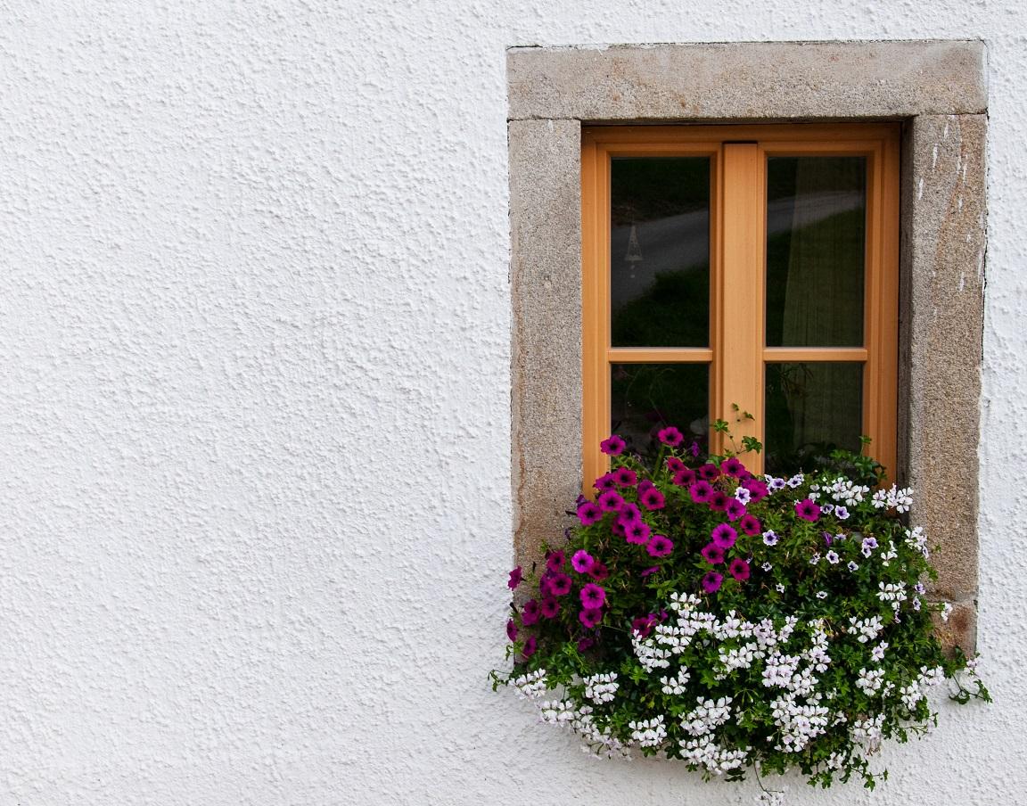 Muškát v okne