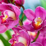 Orchidea - fascinujúca rastlina, ktorej pestovanie a starostlivosť si vyžaduje nemálo trpezlivosti