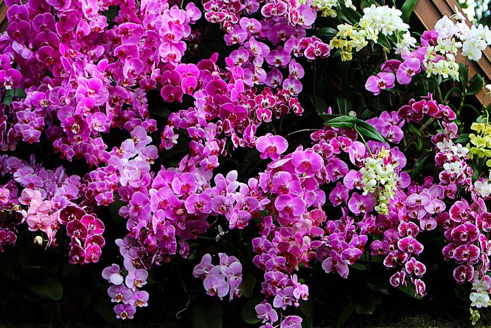 ruňové kvety orchidey v záhrade