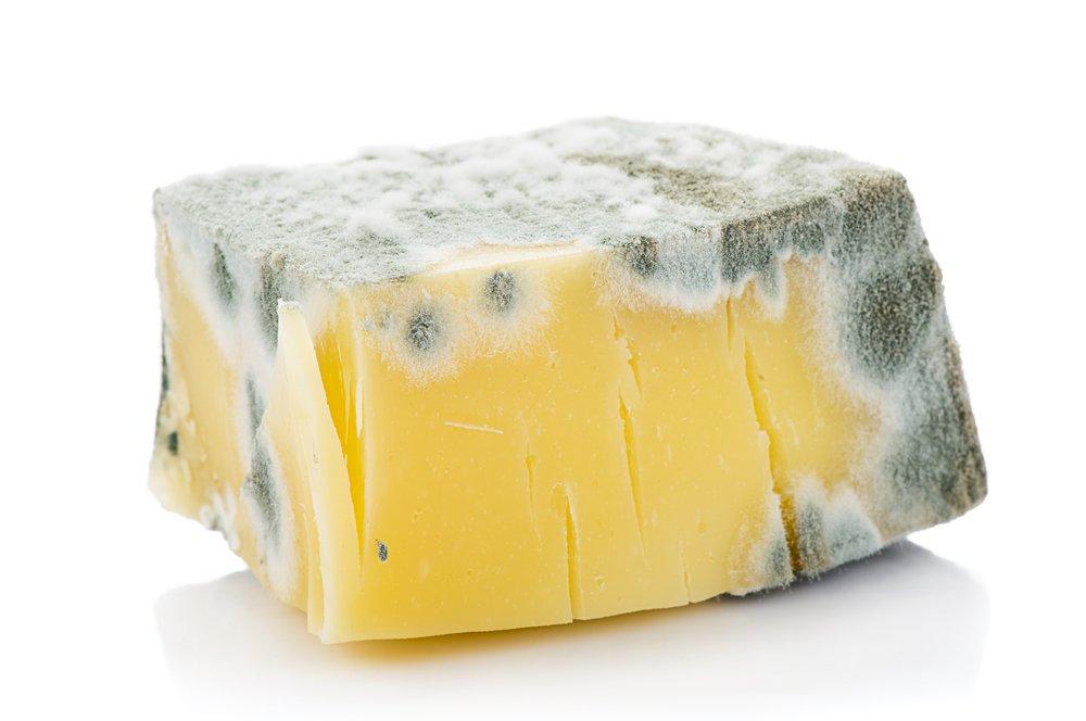 Plesnivý syr