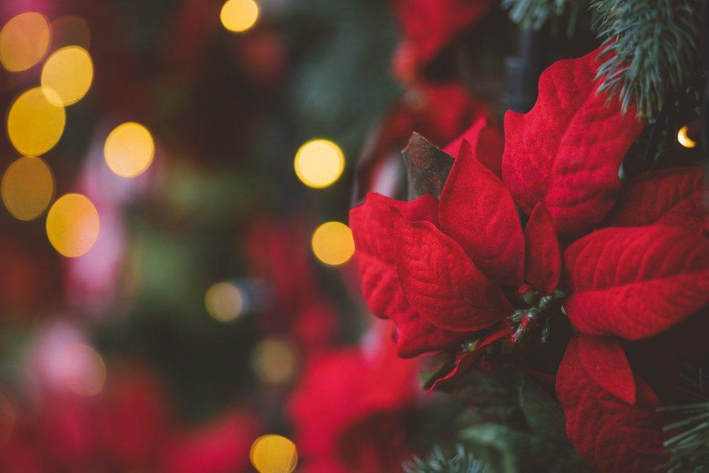 Vianočná ruža ako ozdoba na stromček