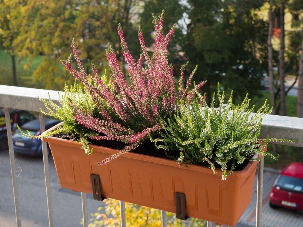 Vres - pestovanie na balkóne