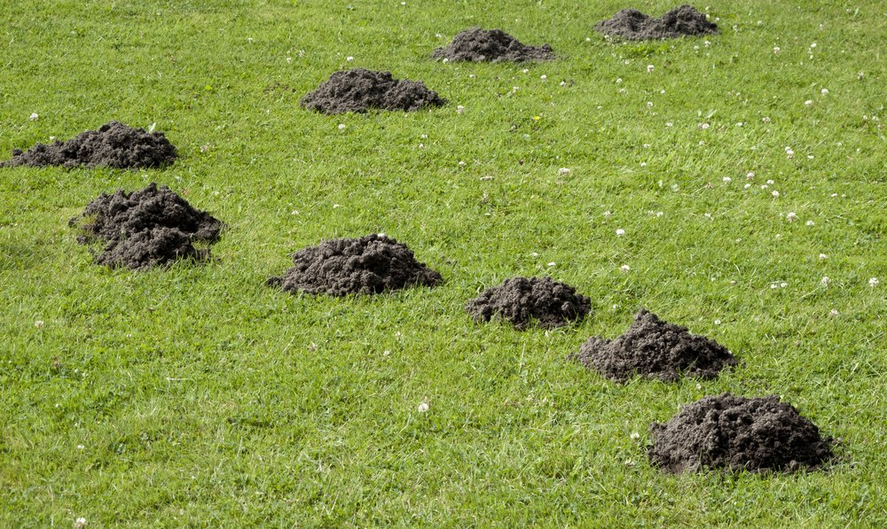 Krtince v tráve