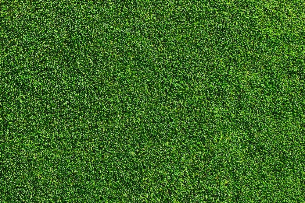 Dokonalý trávnik