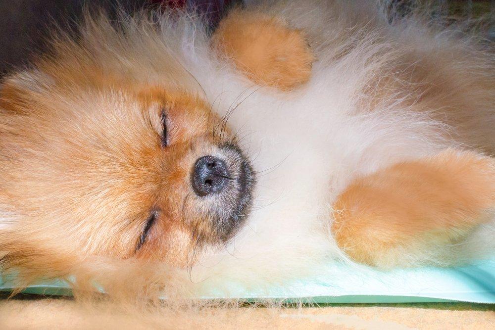 Vyhrievacie podložky pre psov