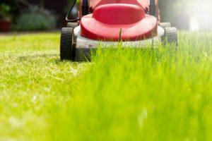 Tráva by sa nemala kosiť na kratšiu ako 30% jej celkovej výšky