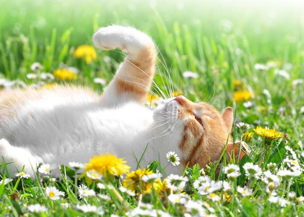 Mačka v záhrade