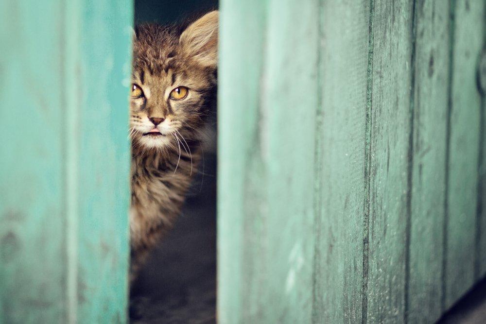 Mačka nazerajúca z kôlne do dvora