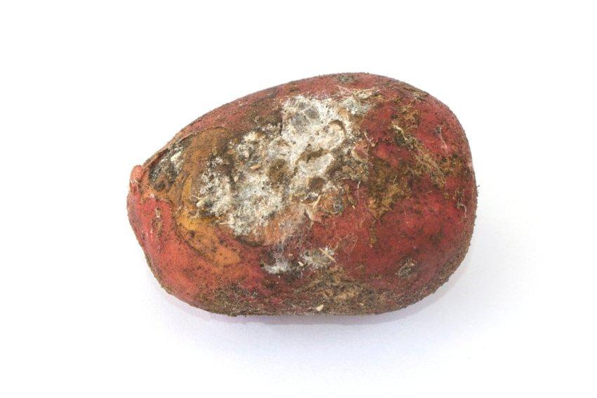 Ochorenie zemiakov