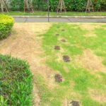 Buriny v trávniku, čo robiť (+ ochrana proti škodcom a chorobám trávnika)