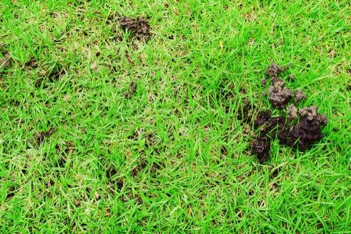 Dážďovky v trávniku