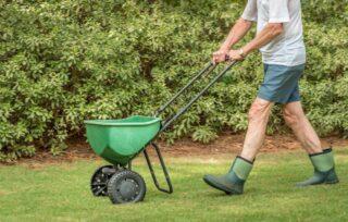 Hnojenie trávnika