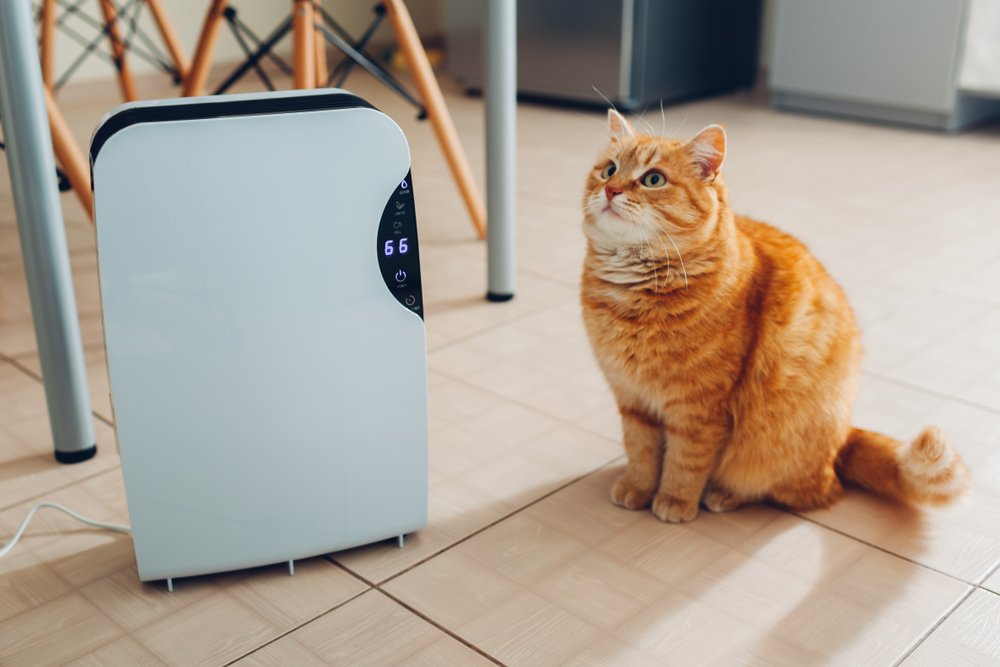 Ionizátor vzduchu vedľa mačky