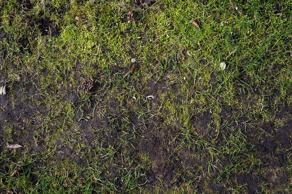 Mach v okrasnom trávniku skoro na jar