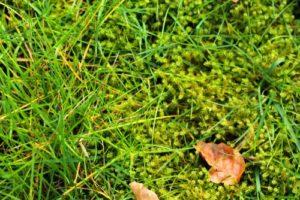Mach v trávniku - detail