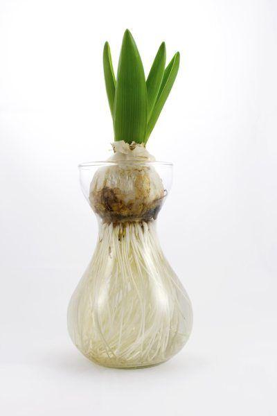 Vaza na pestovanie kvetov bez pôdy