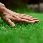 Trávnik svojpomocne - všetko o trávniku od A po Z, založenie a starostlivosť