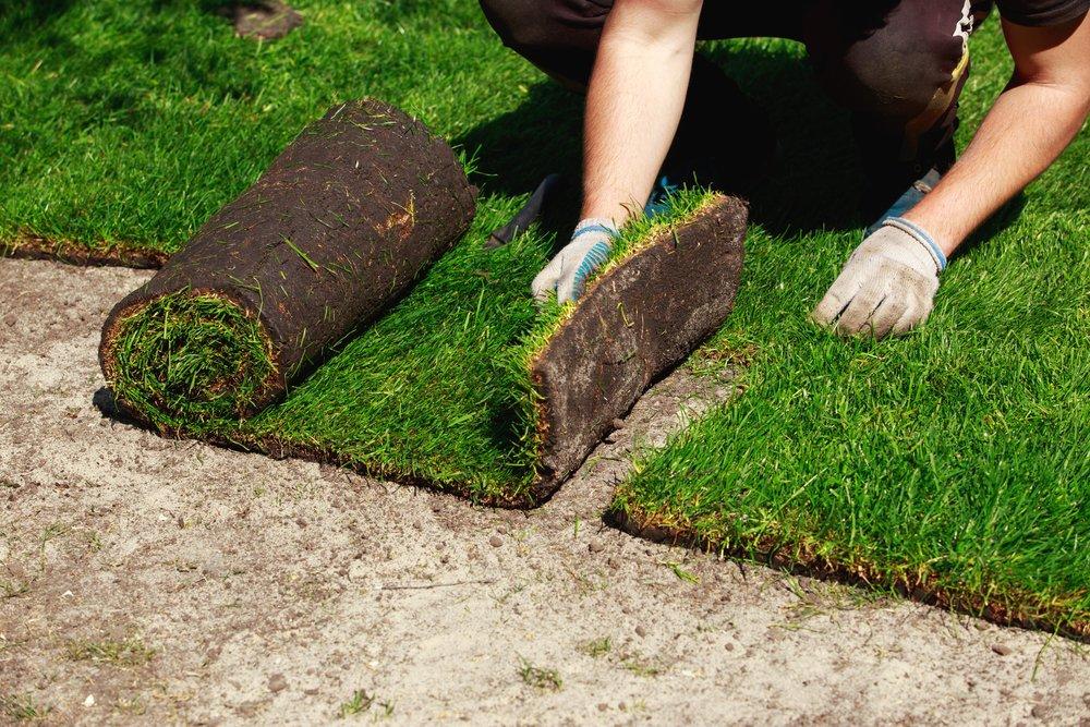 Trávnikový koberec - pokládka