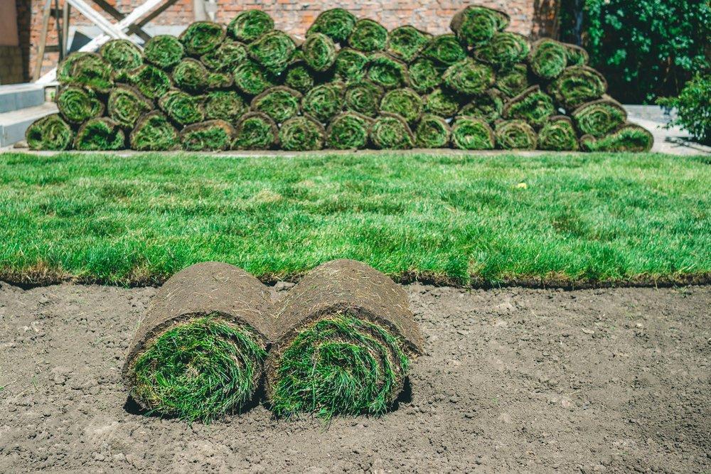 Vyložený kobercový trávnik