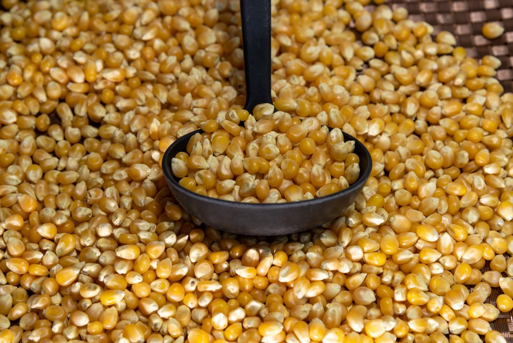 Odmerka kukurice
