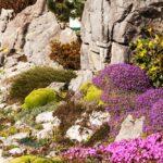 Pestovanie skalničiek v okrasnej záhrade - v tieni aj na slnku + NÁVOD na založenie skalky a TIPY na inšpirácie