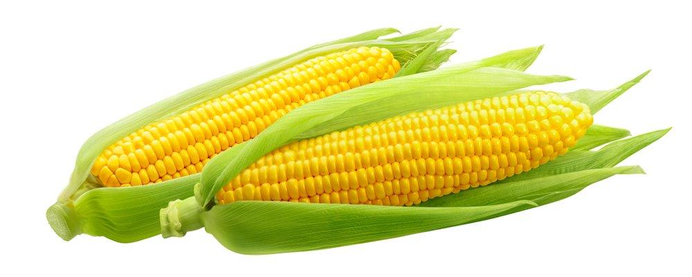 Kukuričné klasy