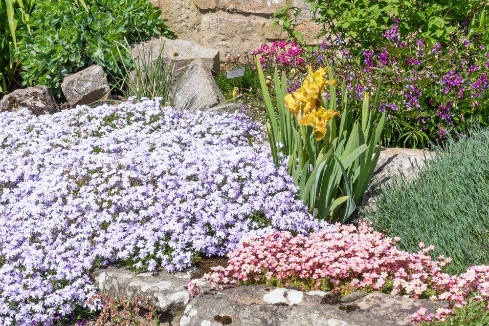 Kvitnúce skalničky vás potešia pestrými farbami