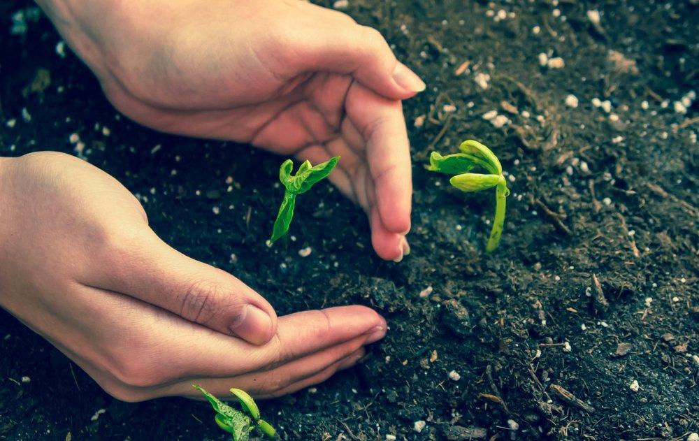 Ruky chrániace klíčky fazule