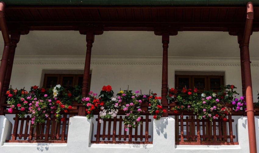 Krásne farebné begónie krášlia balkón