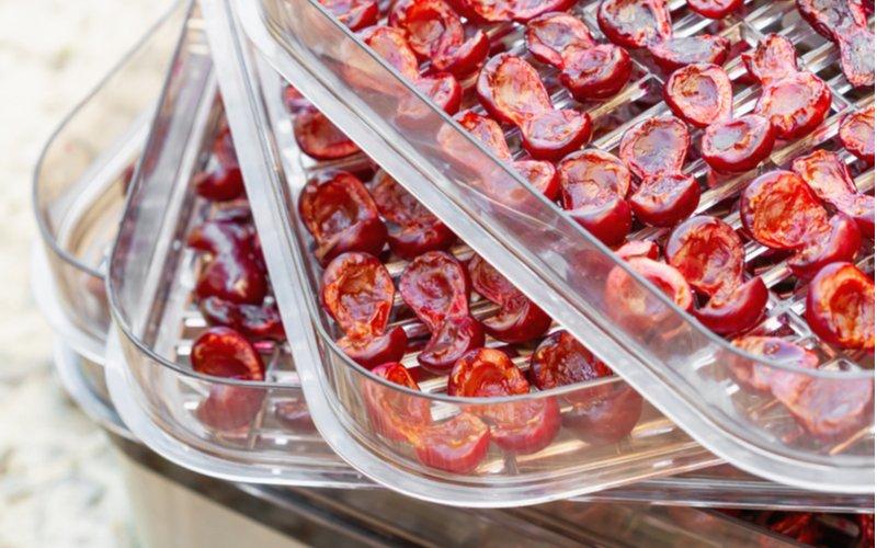 Čerešne v sušičke ovocia