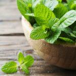 Ako pestovať mätu - aj v byte a v kvetináči
