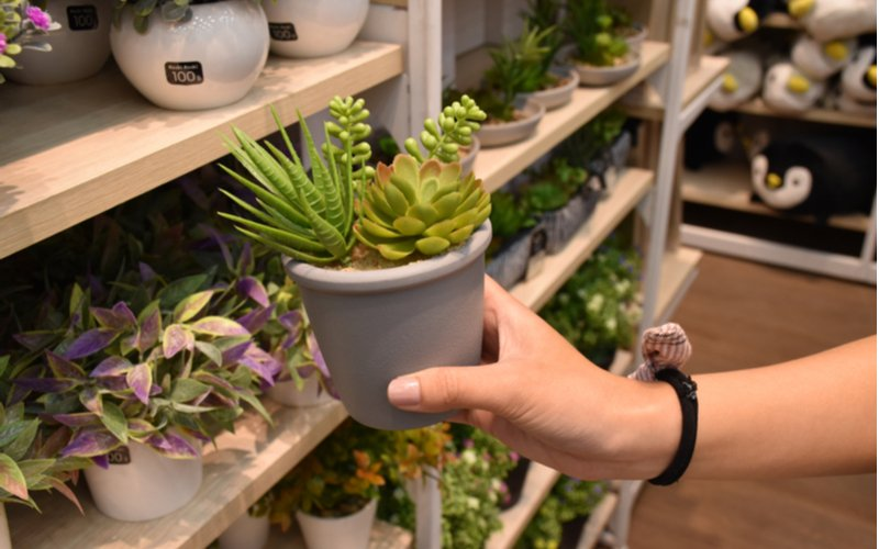 Rastliny v kvetináči