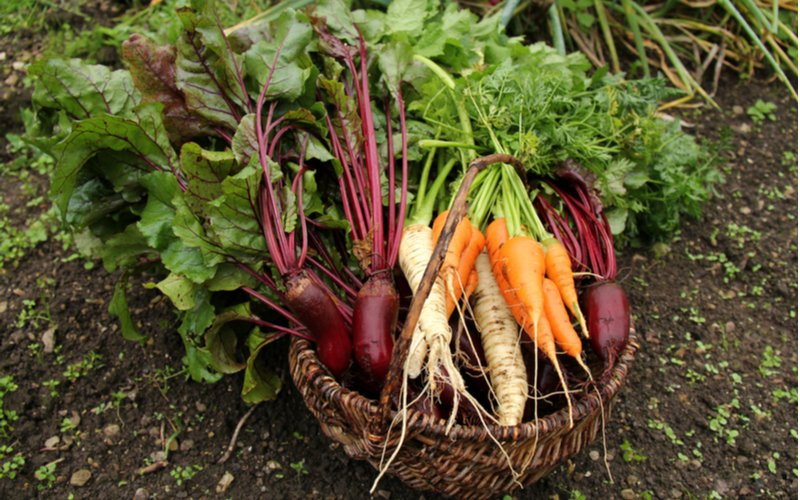 Koreňová zelenina v košíku