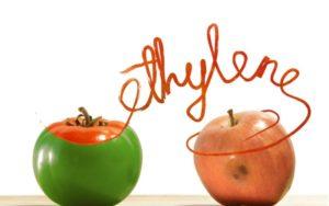 Zelené a červené jablko + nápis ethylene