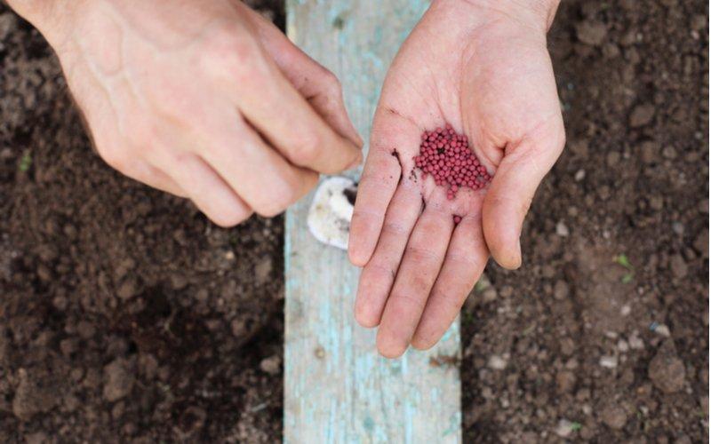 Výsadba semien reďkovky