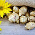 Pestovanie topinambur - ako sadiť a kedy zberať plody slnečnice hľuznatej?