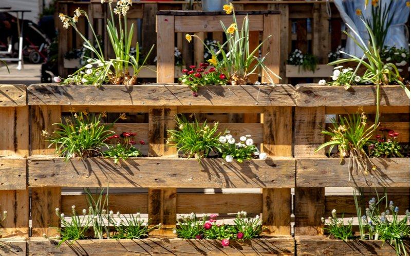 Kvety nasadené v paletách